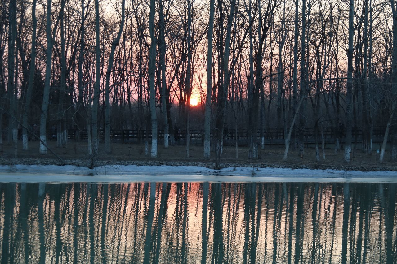 tree, bare tree, nature, winter, cold temperature, reflection, tranquility, beauty in nature, tranquil scene, snow, outdoors, no people, forest, sunset, scenics, lake, branch, tree trunk, water, day, sky