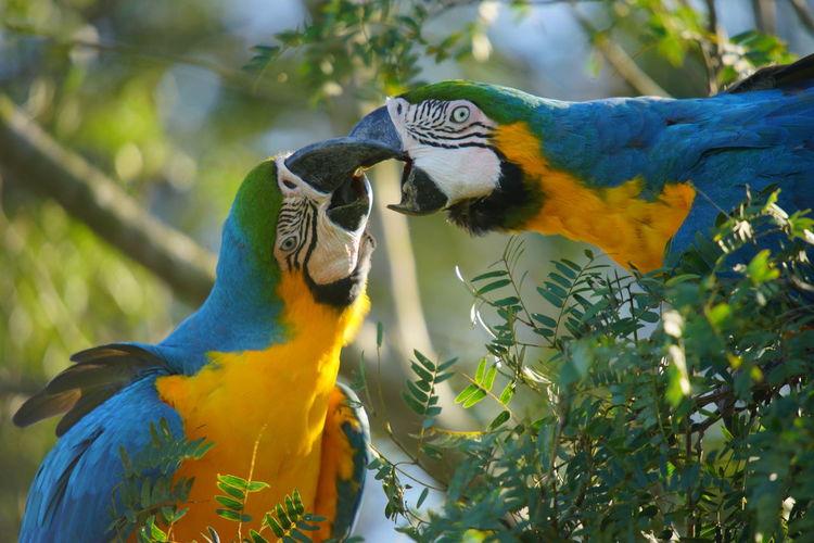 Animal Ara Bird