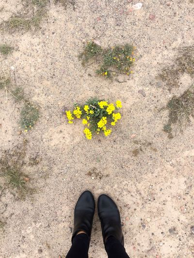 Low section of person standing on yellow flower