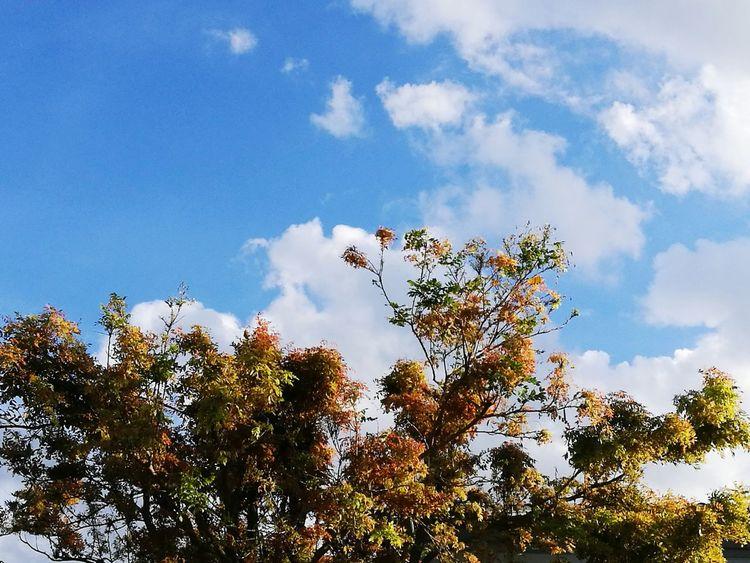 Sky Cloud Clouds And Sky Cloud - Sky Tree Nature Outdoors