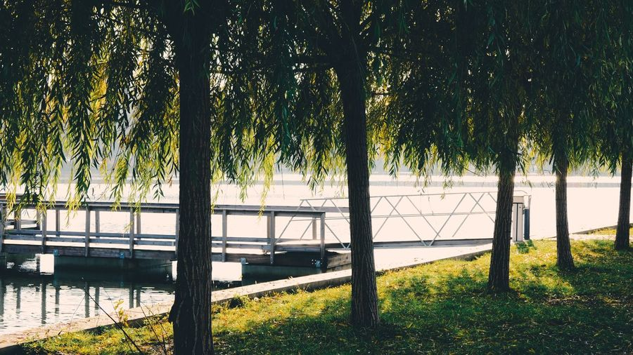 Trees on field by lake