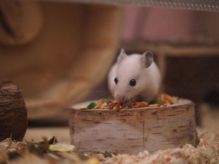 Close-up of animal eating basket