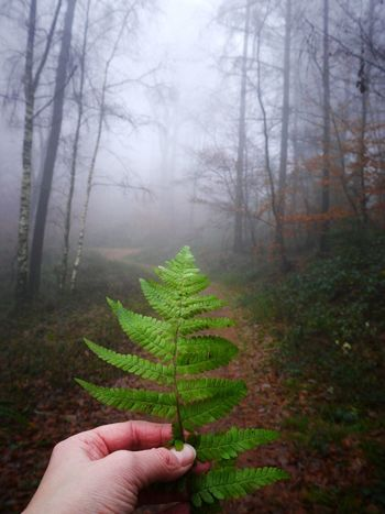 Ferns and trees... Fern Human Hand Human Body Part One Person Tree Holding Plant Forest Nature Fog Branch Close-up Adult Day Autumn Outdoors Leaf Beauty In Nature Shades Of Winter