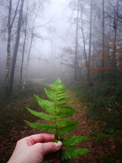 Ferns and