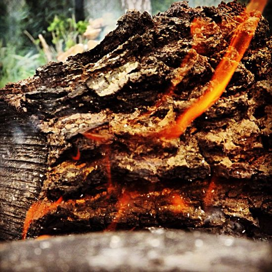 Fire Bonfire Check This Out Nature