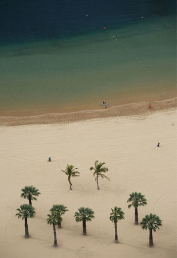 High Angle View Of Coconut Palm Trees At Beach