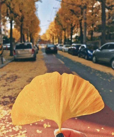 Ginkgo leaf Car