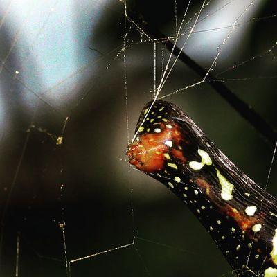 Spider web production. Spider Spiderworld Spiderweb Ig_spiders ig_spider