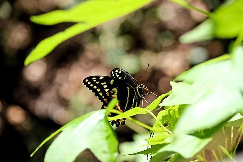 Butterfly, outdoors, woods , plants, flowers, having fun, Beautiful Nature Enjoying Life Open Edit For Everyone Everyday Joy Bluffton Sc, Backyard Photo