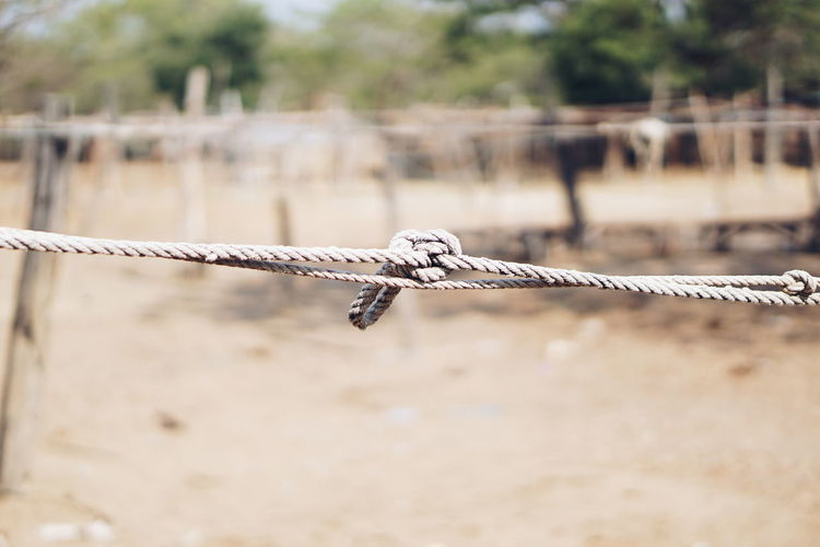 Close-up of barbed wire on rope