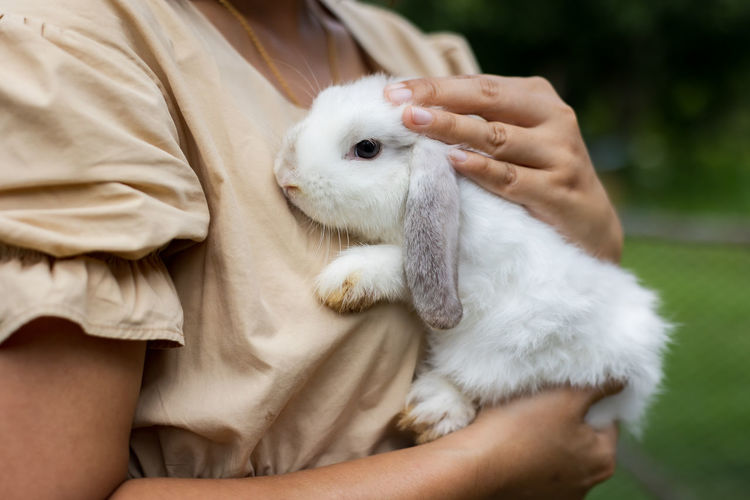 Midsection of person holding white rabbit