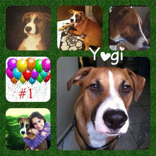 Fortheloveofdogs Happy1stbirthday Yogi Love ♥