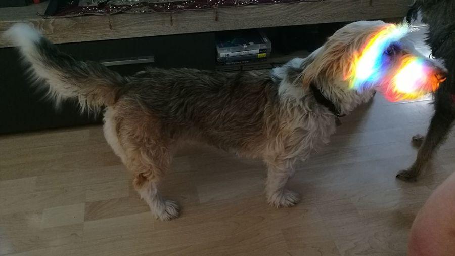 Multi Colored Pets Dog Fun