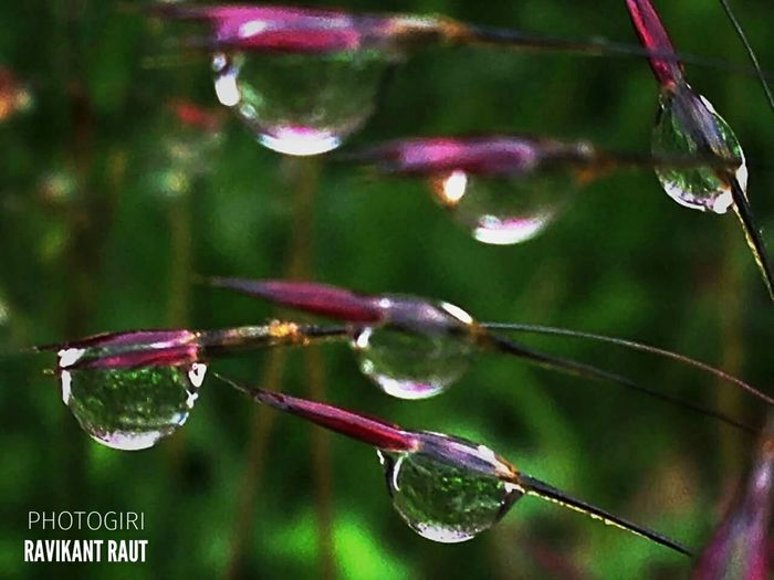 Bubble Water Reflection Nature Beauty In Nature Outdoors Tranquility Photogiri Ravikant Raut