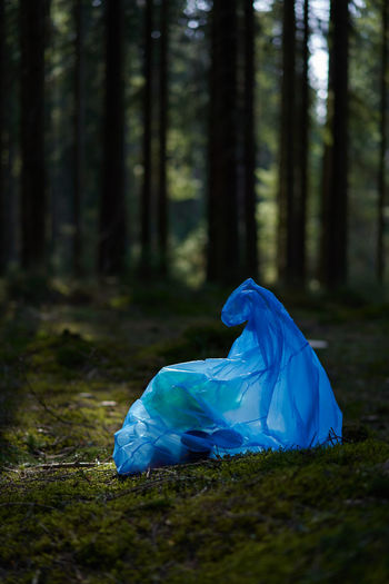 Blue umbrella on field in forest