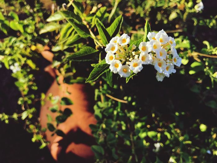 Flower Fragility Plant Growth Nature Freshness Beauty In Nature Close-up No People Outdoors