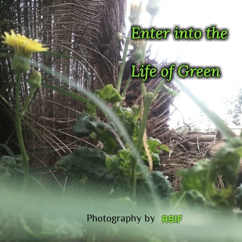 Ever Green Plant Flower Nature