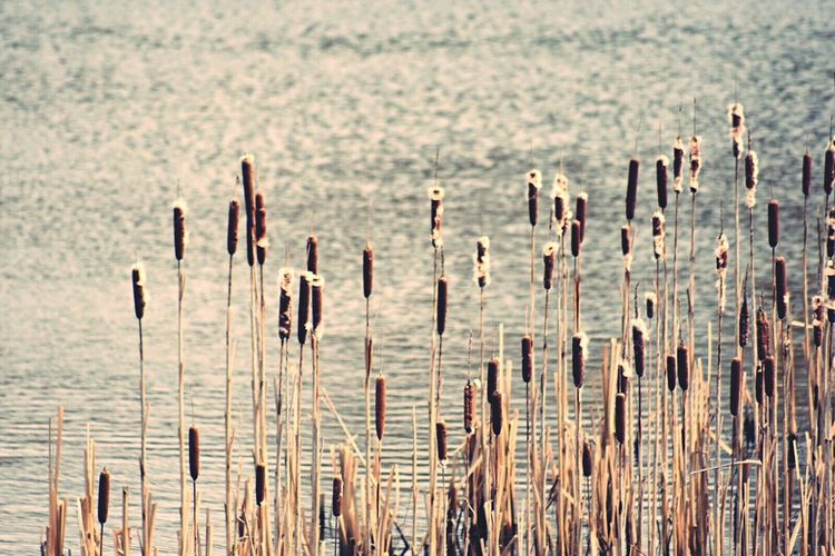 Reeds Bullrushes Water Placid  Calm Escaping Nature Nature_collection EyeEm Nature Lover February 2016 Nature Reserve Pennington Flash