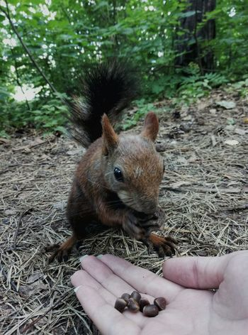 One Animal Animal Themes Hedgehog Human Body Part Animals In The Wild Mammal Nature Animal Wildlife Day Outdoors Human Hand One Person Domestic Animals Pets Close-up People Squirrel Nature Tree Beauty In Nature Forest