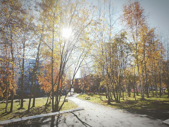 осень прекрасна 🌾🍂🍃 Сургут солнечно