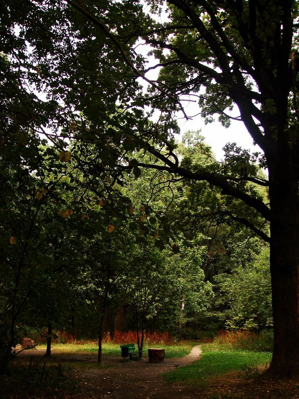 tree, growth, nature, forest, no people, branch, day, outdoors, beauty in nature