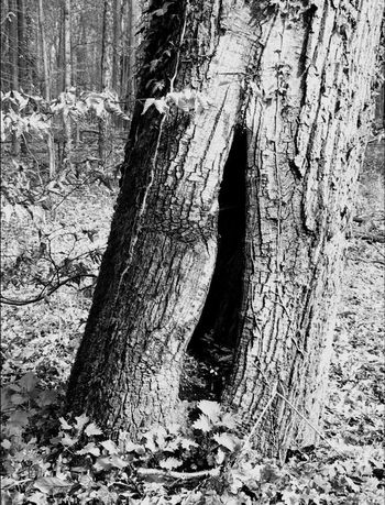 The Secret Spaces In Nowhere Tree Trunk In Nature  In Focus In Forest EyeEm Black&white!