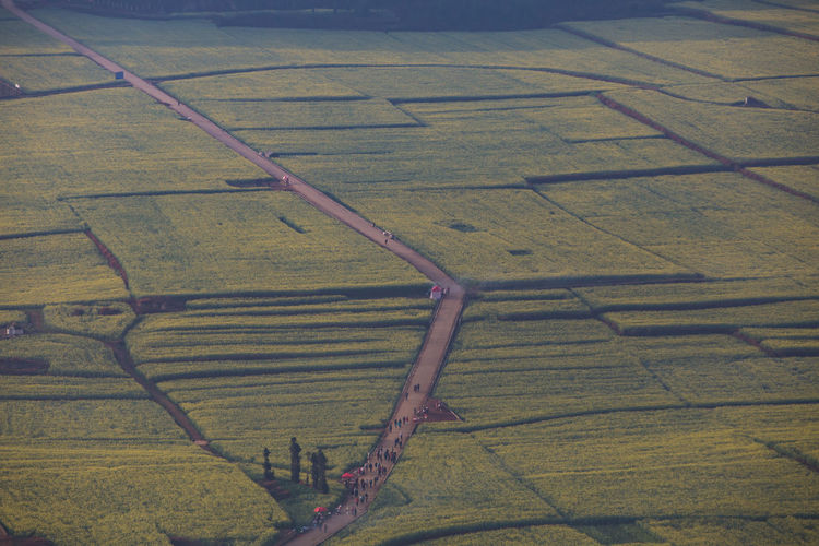Field Rural Scene Environment Landscape Agriculture Farm No People Land Day Nature High Angle View Aerial View Pattern Tranquil Scene Scenics - Nature Beauty In Nature Outdoors Growth Tranquility Plant
