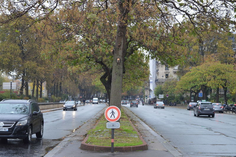 Cars on road by trees in city