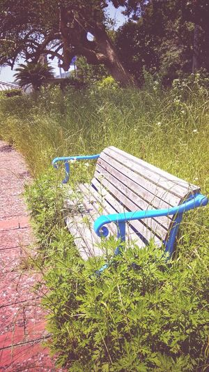 Live For The Story Green Color Grass No People Day Outdoors Park - Man Made Space Nature Chair