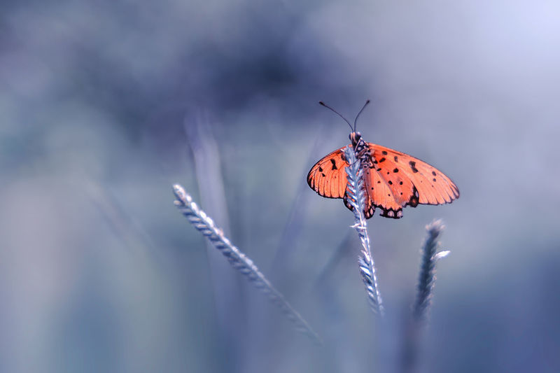 Waiting for you Animal Animal Themes Beautiful Beauty In Nature Bestoftheday Bestsellers Blue Bokeh Butterfly INDONESIA Insect Macro Macro Photography Macro_collection Nature Nature_collection Small World