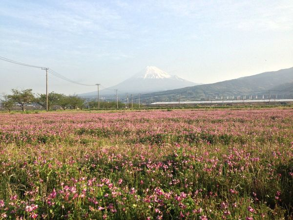 Flowers Japan Morning Sky Mt.Fuji Fujisan Bullet Train Clouds And Sky