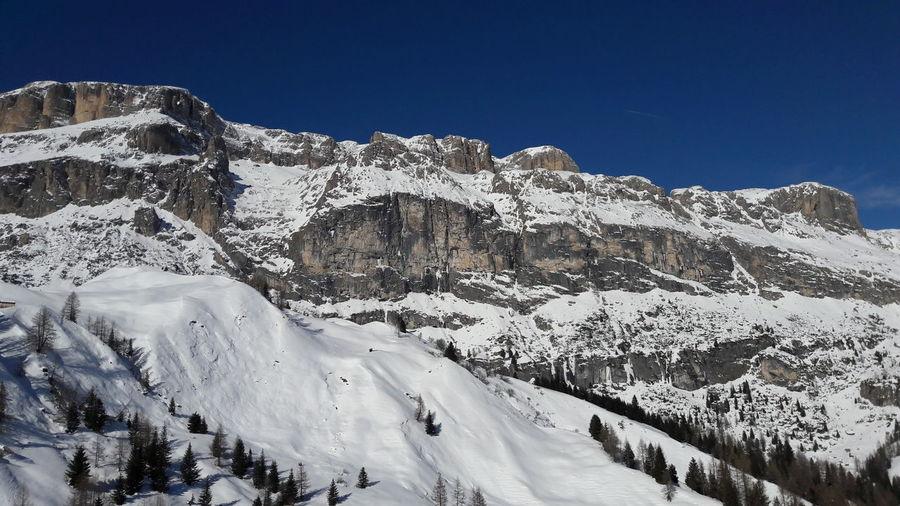 Dolomites Tree