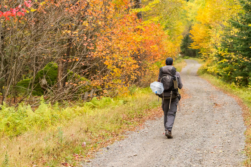 Rear View Of Backpacker Walking On Dirt Road In Forest