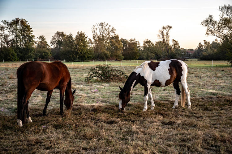 two horses in