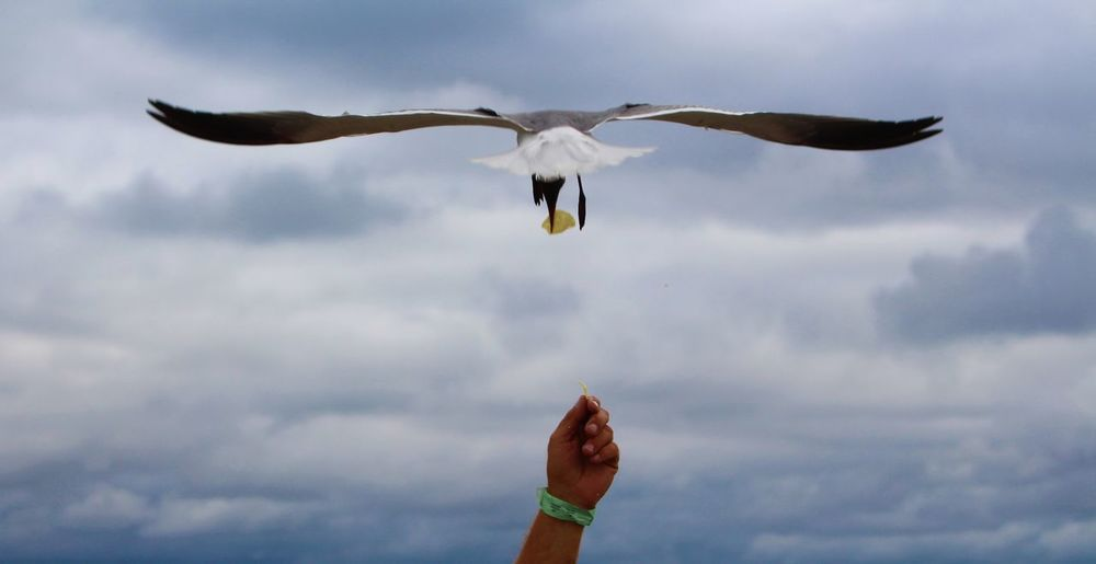 Close-up of bird flying against sky