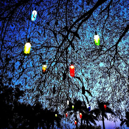 Late Evening Sky Bottles With Lighting Equipment Glowing In The Dark No People Tree Outdoors Branch Nature Sky Freshness EyeEmNewHere Light Effect Hanging Restruant On The Bay  Textured  Hand Made In A Bottle Pattern Multi Colored Visual Feast Neighborhood Map The Great Outdoors - 2017 EyeEm Awards EyeEmNewHere BYOPaper! EyeEmNewHere EyeEmNewHere