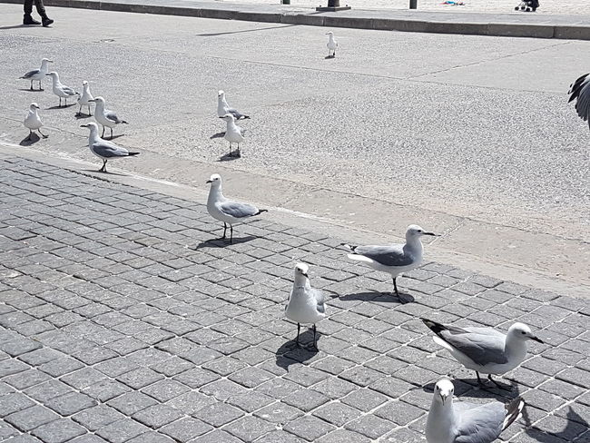Animal Themes Animal Wildlife Animals In The Wild Beggars Bird Day Flock Of Birds Flying Large Group Of Animals Nature Outdoors Sand Seagull