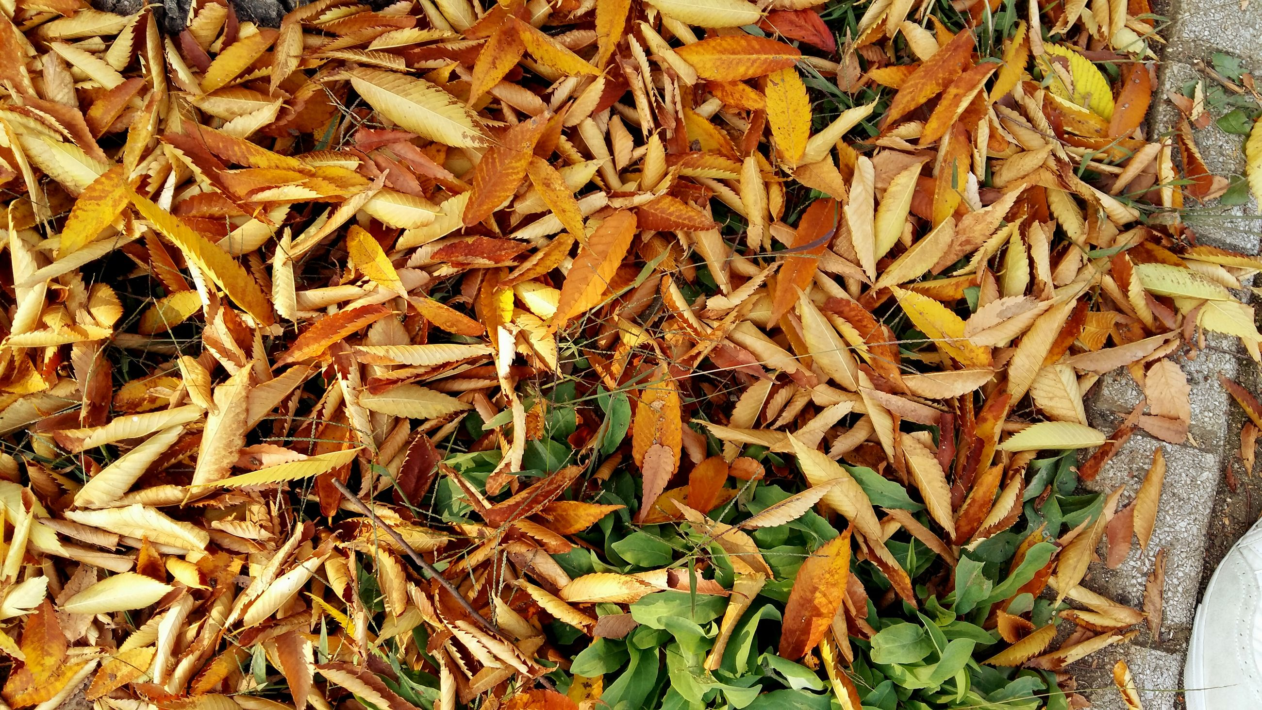 leaf, dry, high angle view, abundance, full frame, backgrounds, leaves, autumn, change, close-up, nature, field, brown, large group of objects, day, season, no people, fallen, natural pattern, outdoors