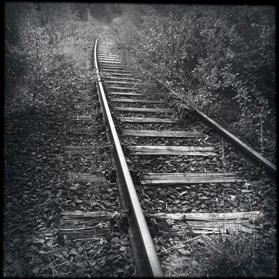 Abandoned rails leading to nowhere Abandoned Auto Post Production Filter Day Direction Forest Germany Growth Hipstamatic Land Metal Nature No People Outdoors Plant Rail Rail Transportation Railroad Track The Way Forward Track Tranquility Transfer Print Transportation Tree