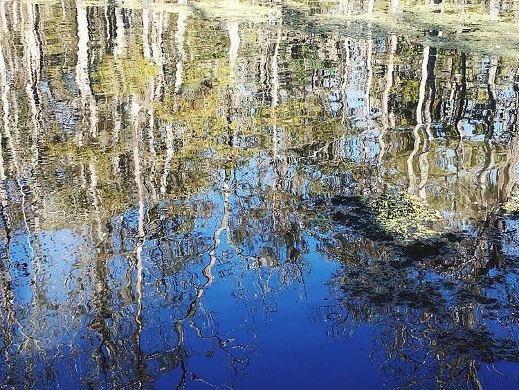 Swamps New Orleans New Orleans Swamp Reflection Water Full Frame Backgrounds Day No People Close-up Outdoors Nature