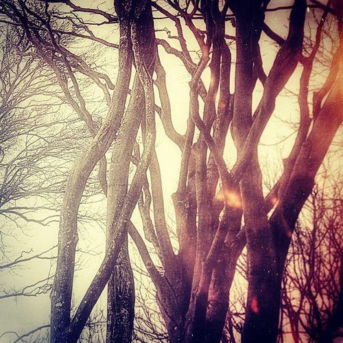 #Iloveyoutrees Iloveyoutrees