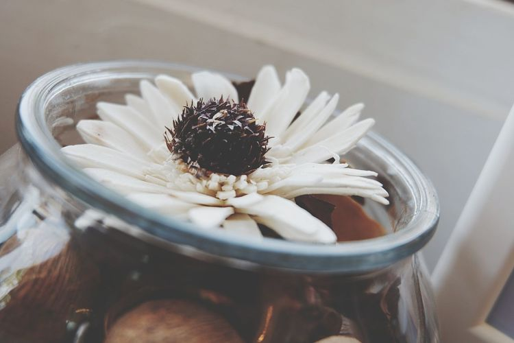 High angle view of white flower in jar on table