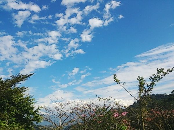 Trees Clouds And Sky Tyan