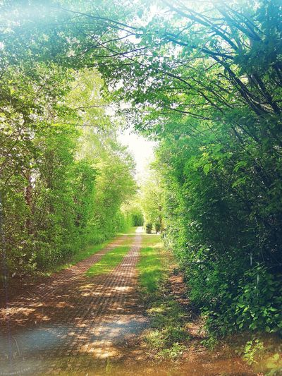 Forest Path Nature Naturelover Spring Leafy Sunshine Warm Europe Germany Going Remote Tree Water Field Grass Green Color Foliage Vegetation Flora Scenery Blossoming  Botanical Dense Tree Trunk