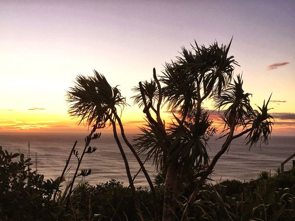 Sunset Silhouettes New Zealand Impressions Cabbage Tree Cordyline Australis Sundown, Nightfall, Close Of Day, Twilight, Dusk, Evening Sea Sunset Horizon Over Water Beach Nature Beauty In Nature Tranquil Scene Silhouette Idyllic