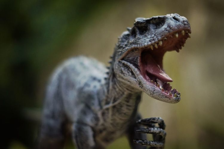 Indominus-Rex Indominusrex Jurassic Park Jurassicworld Jurassic World Of Dino's Toyphotography Toy Toys Roar Dinosaur Dinosaurs Rex Tyrannosaurus Indominus EyeEm Selects Yawning Shouting Screaming Anger Roaring Mouth Open Furious Aggression  Close-up