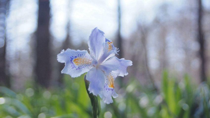 横向きの花 EyeEm Flower CanonFD  Streamzoo Photowalk #oldlens