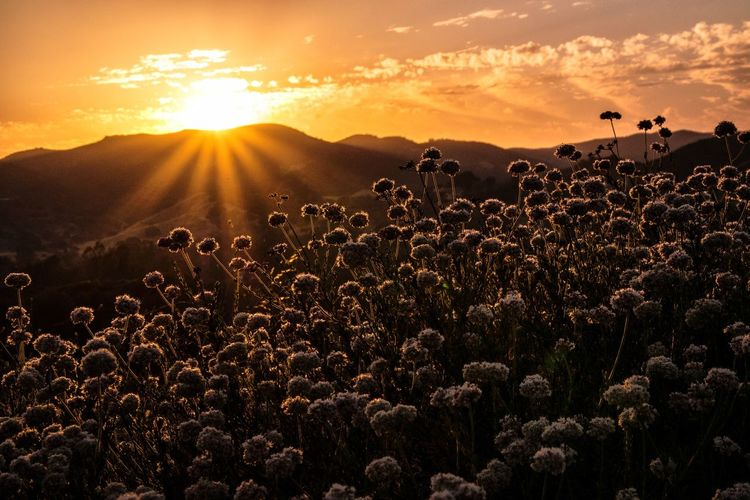Sunset Over Meadow