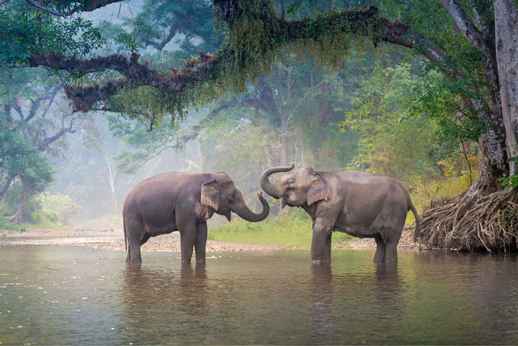 Elephants in lake against trees