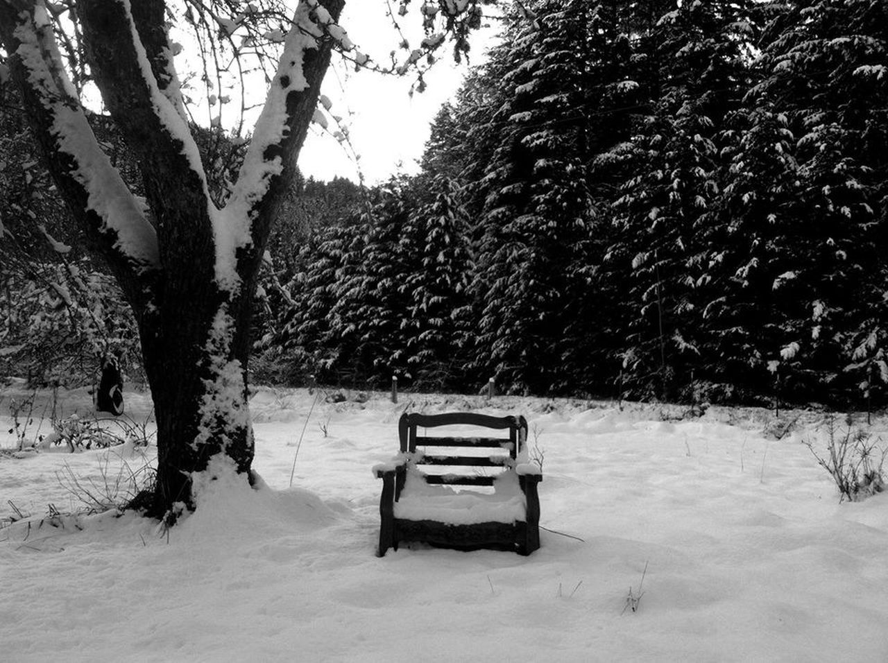 tree, snow, winter, cold temperature, nature, landscape, tranquility, outdoors, tree trunk, scenics, beauty in nature, no people, day, sky